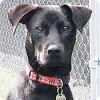 Adopt A Pet :: Sid - San Francisco, CA