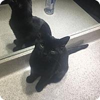 Adopt A Pet :: Caroline - Covington, KY
