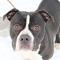 Adopt A Pet :: Bankz - Greensboro, NC