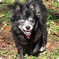 Adopt A Pet :: Sadie - New Port Richey, FL