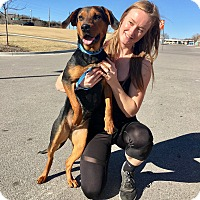 Adopt A Pet :: Sapphire - Manhattan, KS