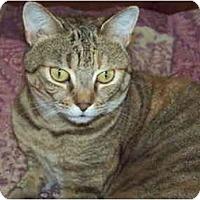 Adopt A Pet :: Amanda - Bonita Springs, FL