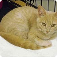 Adopt A Pet :: Apollo - Mission, BC