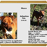 Adopt A Pet :: Maxx - Crowley, LA