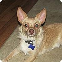 Adopt A Pet :: Rufus - Franklin, VA