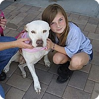 Adopt A Pet :: Ruby - Scottsdale, AZ
