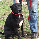 Adopt A Pet :: Rudy