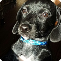 Adopt A Pet :: Little Jack - Knoxville, TN