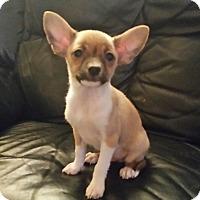Adopt A Pet :: Denny - Glendale, AZ