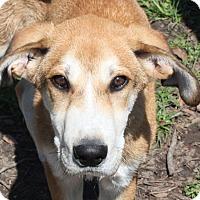 Adopt A Pet :: Duke - in Maine - kennebunkport, ME
