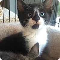 Adopt A Pet :: Kipper - Edmonton, AB