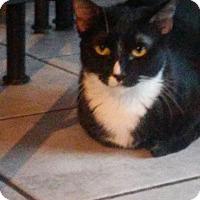 Adopt A Pet :: Marlene - Mesa, AZ