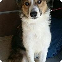Adopt A Pet :: Molly - Alpharetta, GA