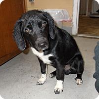 Adopt A Pet :: Newton - Lewisburg, TN