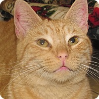 Adopt A Pet :: Manny - New Windsor, NY