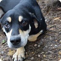 Adopt A Pet :: Bill - Bradenton, FL