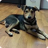 Adopt A Pet :: Stetson - Lisbon, OH