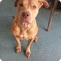 Adopt A Pet :: Gracie - Berea, OH