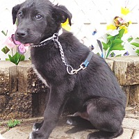 Adopt A Pet :: Tinley - West Chicago, IL