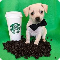 Adopt A Pet :: Venti - Irvine, CA