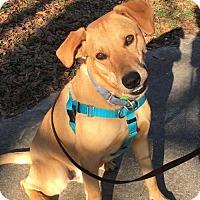Adopt A Pet :: Jackson! - Rowayton, CT