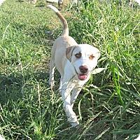 Adopt A Pet :: Lunah - Copperas Cove, TX