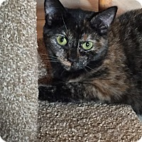 Adopt A Pet :: Miss Parker - Staten Island, NY