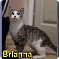 Adopt A Pet :: Brianna - Aldie, VA