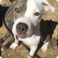 Adopt A Pet :: Kona - Richmond, CA