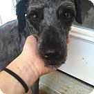 Adopt A Pet :: Larry