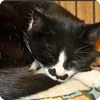 Adopt A Pet :: Coriander - Smithers, BC