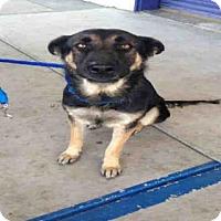 Adopt A Pet :: A1040448 - Bakersfield, CA