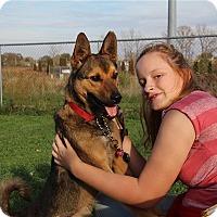 Adopt A Pet :: Biscuit - Elyria, OH