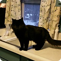 Adopt A Pet :: Ebony - Minneapolis, MN