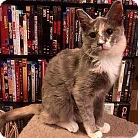 Adopt A Pet :: Vesta - Riverside, CA
