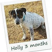 Adopt A Pet :: Holly - Hinesburg, VT