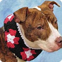 Adopt A Pet :: SAMPSON - Louisville, KY
