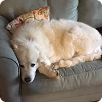 Adopt A Pet :: Abby Williams - Kyle, TX