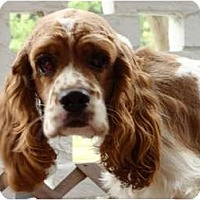 Adopt A Pet :: Karo - Sugarland, TX