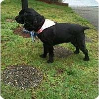 Adopt A Pet :: Sophie-2 - Tacoma, WA