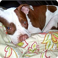 Adopt A Pet :: Rubicon - Reisterstown, MD