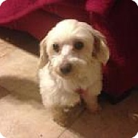 Adopt A Pet :: Krissy - South Amboy, NJ