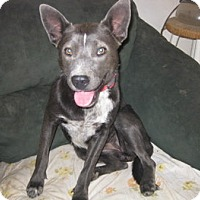Adopt A Pet :: Micah - San Antonio, TX