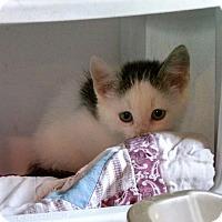 Adopt A Pet :: Noisemaker - Geneseo, IL