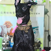 Adopt A Pet :: Anita - Surrey, BC