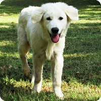 Adopt A Pet :: Tatum *New* - Kyle, TX