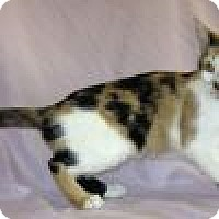 Adopt A Pet :: Pipper - Powell, OH