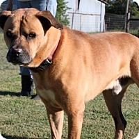Adopt A Pet :: Kujo - Salem, NH