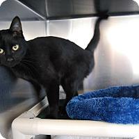 Adopt A Pet :: Layla - Ridgway, CO
