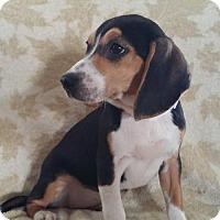 Adopt A Pet :: Babykins - Nashville, TN